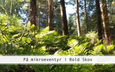 Rold Skov er perfekt til mikroeventyr