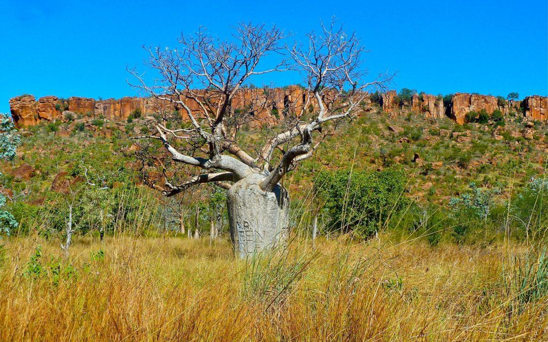 Vandring i Australien – hvordan finder du ruter?