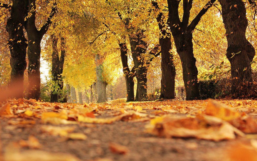 Efterårsaktiviteter – inspiration til, hvad du kan lave i efterårsferien