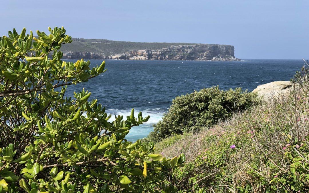 Rejseguide til Sydney –  naturoplevelser i Australien
