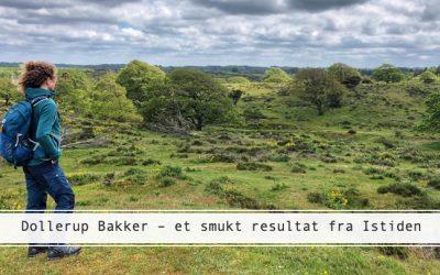 Dollerup Bakker: Vandring gennem troldelandskab og barsk hede