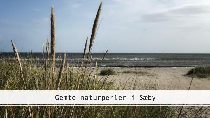 Gemte naturperler i Sæby – Professorens Plantage og Gedebjerget