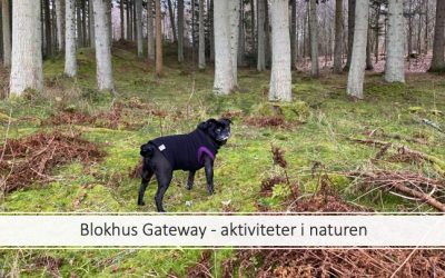 Blokhus Gateway – aktiviteter for alle aldre