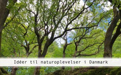 Idéer til naturoplevelser i Danmark