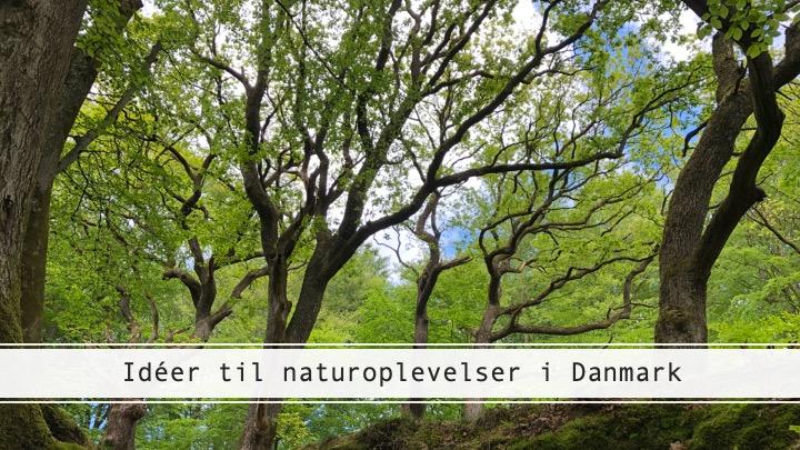 Naturoplevelser i Danmark