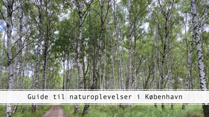 Guide til naturoplevelser i København